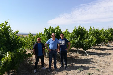 Visitamos con Antonio Doblas Martos los viñedos para la selección de las cepas con las que trabajaremos en el proyecto.