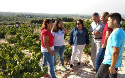 Concluyen los trabajos de vendimia para la elaboración de los vinos del proyecto de investigación Montilla-Moriles, el resurgir